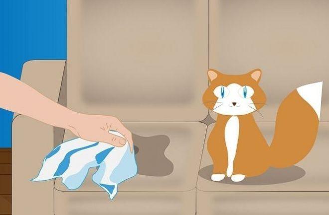 Убрать запах кошачьей мочи