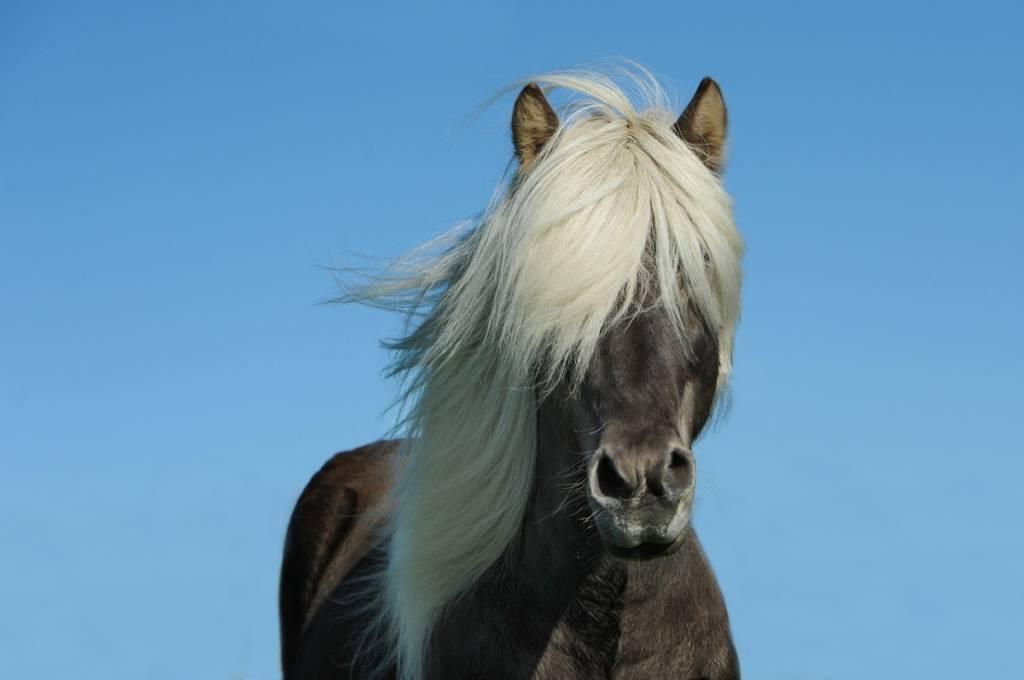 Какой такой мышастый конь