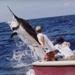 На филипинах двухметровая рыба потопила лодку