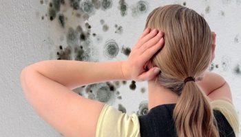 Как избежать появления плесени в подвале