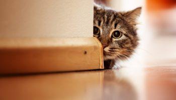Как защитить обои при ремонте квартиры, где живет кошка