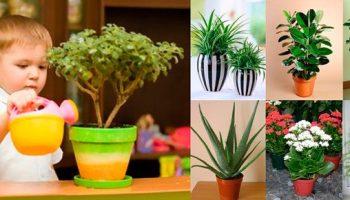 5 растений, которые идеально подойдут для детской
