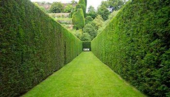 10 быстрорастущих растений, которые подойдут для создания «живой» изгороди на даче